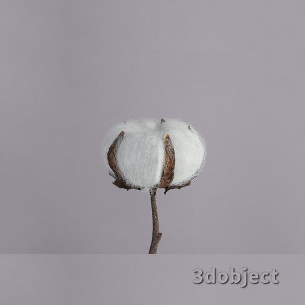 3d модель растения хлопчатник
