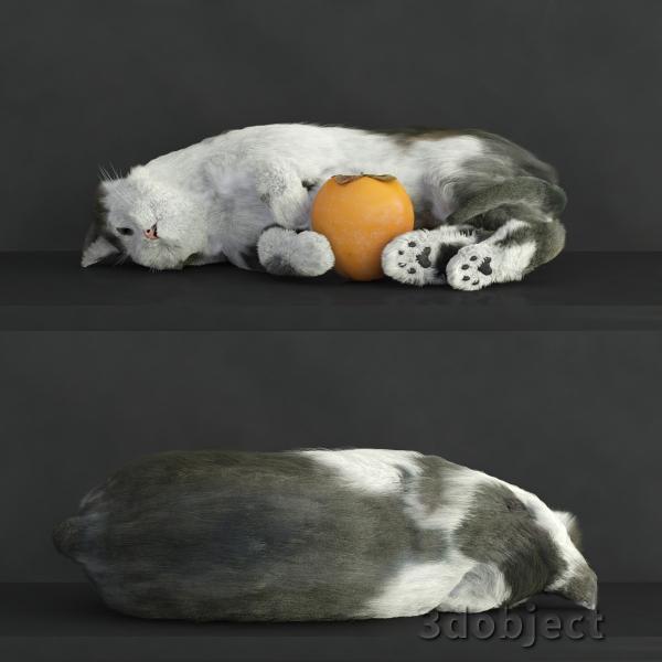 3d модель кота Винсента с хурмой_1