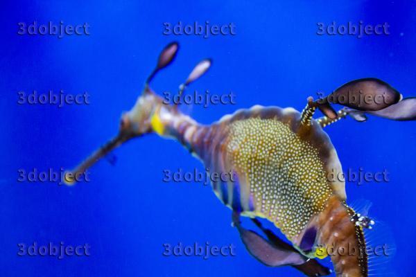 Морской конек фото_4